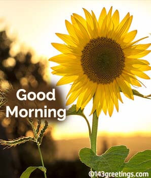 Good Morning >> Good Morning Messages Best Good Morning Wishes 143 Greetings