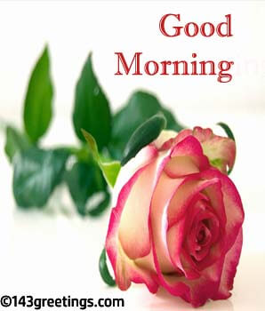 Good Morning Messages Best Good Morning Wishes 143 Greetings