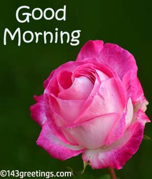 Good morning messages best good morning wishes 143 greetings good morning images hd m4hsunfo
